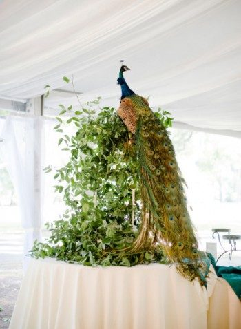 Peacock wedding decor
