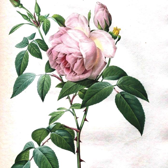 Smock Vintage Pink Rose Pattern Smock