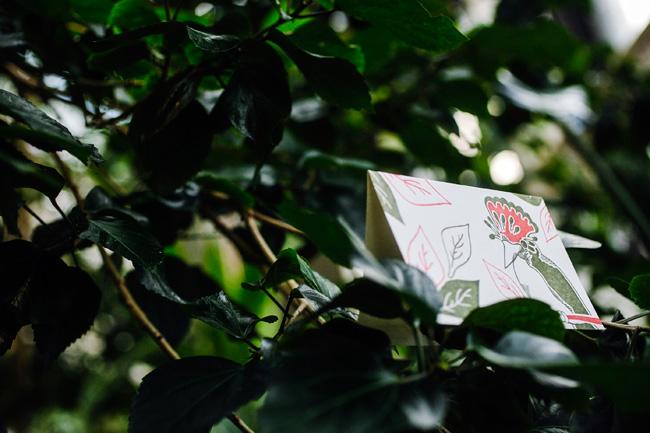 Smock rainforest cards