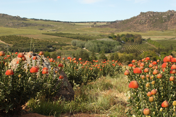 Flower fields that surround Essie Letterpress from South Africa offers gorgeous views.