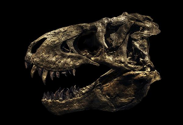 (c) Christian Voigt Tyrannosaurus